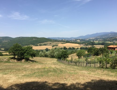 Building Plots in Tuscany – Plot 2 in Borgo La Casa – 10,250 square meters (m2)