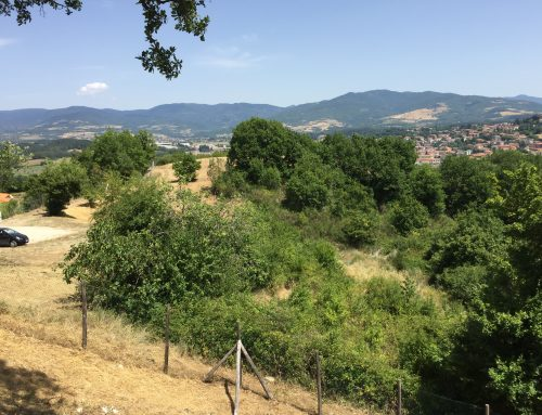 Building Plots in Tuscany – Plot 4 in Borgo La Casa – 15,547 sq.yd